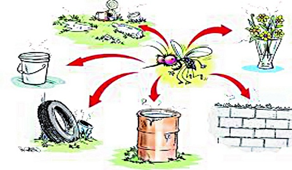 how to get safe from dengue
