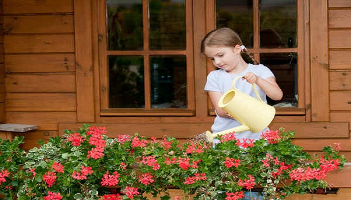 घर में लाए यह 4 पौधे और बनाए आस पास की हवा को शुद्ध