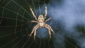 how to get rid of the spider web